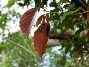 Raupen Indio Maiz Nationalpark by Birgit Strauch Bewusstseinscoaching & Shiatsu