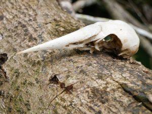 Indio Maiz Nationalpark by Birgit Strauch Bewusstseinscoaching & Shiatsu