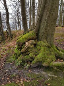 Rügen Buchenwald Jasmund Nationalparkmit dem Minicamper by Birgit Strauch Bewusstseinscoaching & Shiatsu