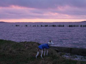Rügen Spyker Bucht by Birgit Strauch Bewusstseinscoaching & Shiatsu