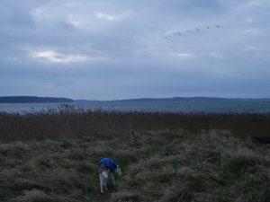 Rügen Spyker Bucht mit dem Minicamper by Birgit Strauch Bewusstseinscoaching & Shiatsu