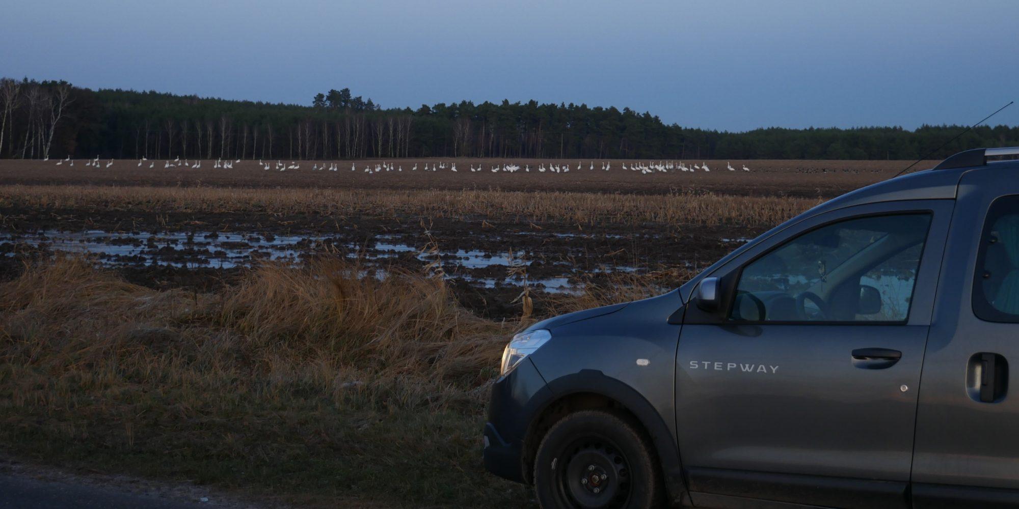 Polnische Grenze Zugvögel Gänse Minicamper by Birgit Strauch Bewusstseinscoaching & Shiatsu