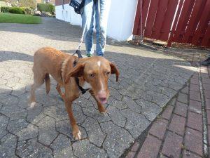 Aryuda por Animales Hundevermittlung Tierschutz by Birgit Strauch