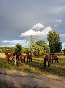 Mit Minicamper und Dachzelt nach Usedom Sauzin by Birgit Strauch