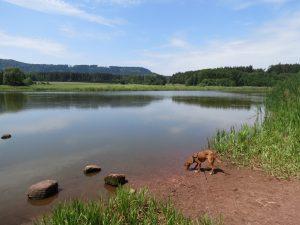 Minicamper See in Ostböhmen bei Krinice by Birgit Strauch