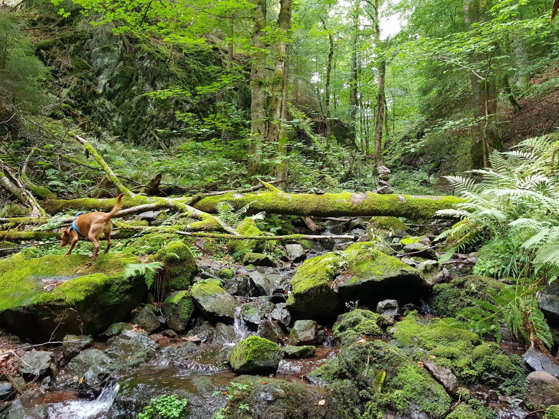 Minicamper Tour zum finsteren Loch beiStützerbach im Thüringer Wald by Birgit Strauch