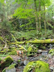 Minicamper Tour zum finsteren Loch bei Stützerbach im Thüringer Wald by Birgit Strauch