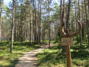 Minicamper Tour zum Nationalpark Sliteres zum Aussichtspunkt Evažu Stāvkrasts by Birgit Strauch