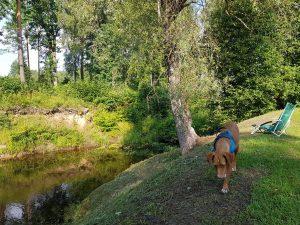 Mit dem Minicamper nach Kekavas Camping und Zoo bei Riga by Birgit Strauch