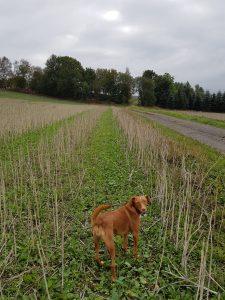 Minicamper Tour nach Seiffen im Erzgebirge by Birgit Strauch