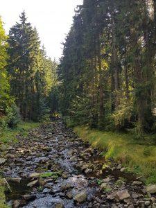 Tal der schwarzen Pockau im Schwarzwassertal Erzgebirge by Birgit Strauch
