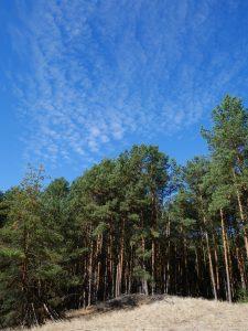 Wald bei Gussow Dolgensee by Birgit Strauch