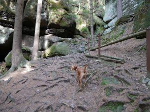Feenhöhle bei Khaa Böhmische Schweiz by Birgit Strauch