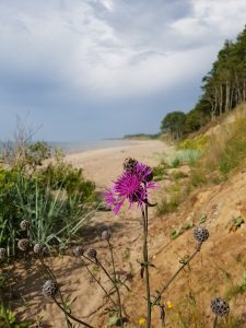 Wilder Distel am wilden Strand by Birgit Strauch
