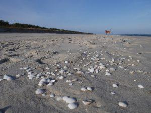 Mit dem Minicamper an den Strand von Jurata by Birgit Strauch