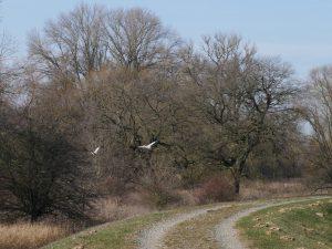 Radtour an der Elbe bei Bälow by Birgit Strauch
