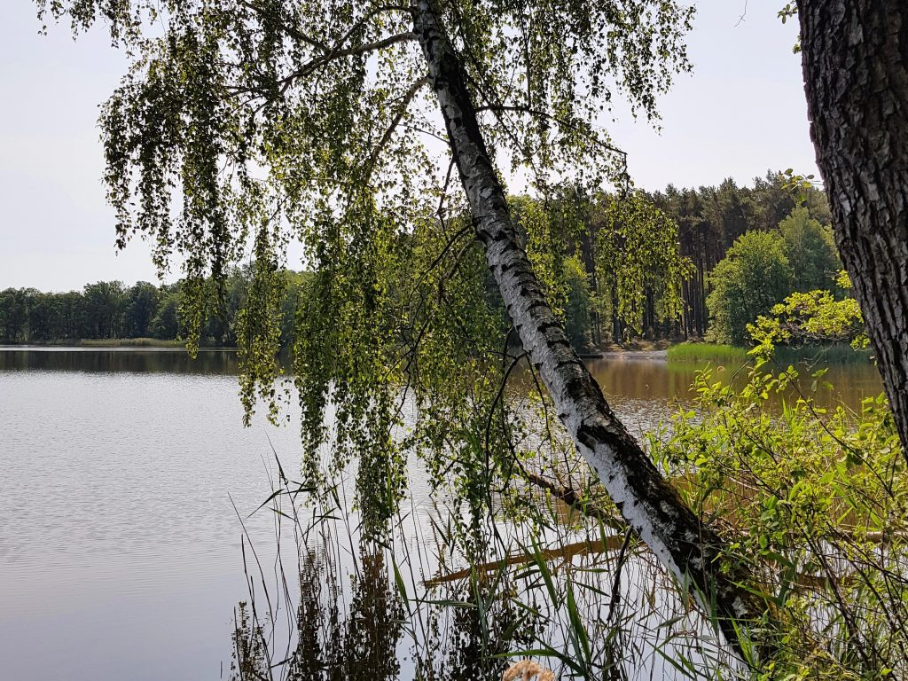 Freistehen am Oderiner See by Birgit Strauch