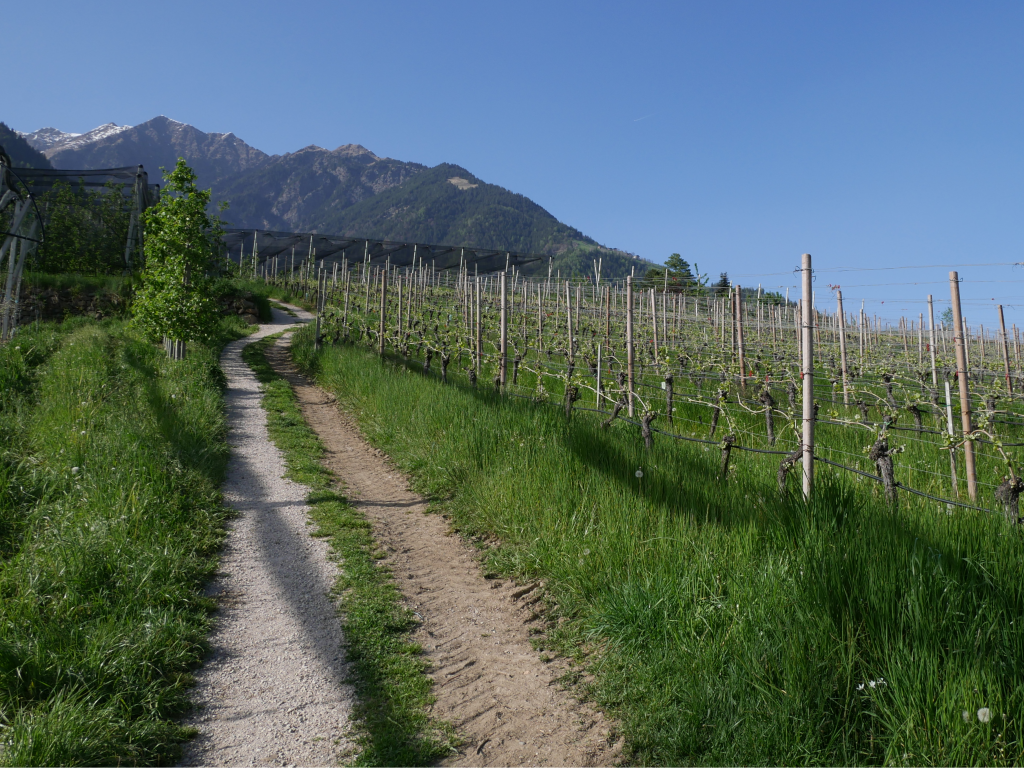 Dorf Tirol by Birgit Strauch