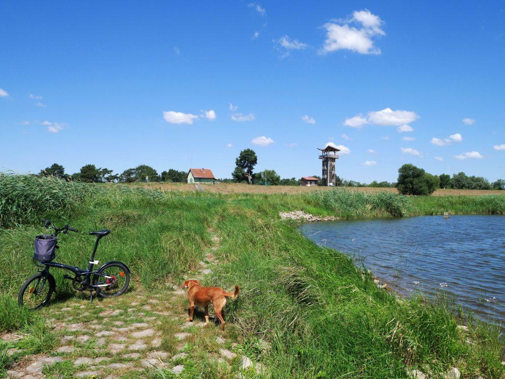 Einsame Badestelle an der Oder by Birgit Strauch
