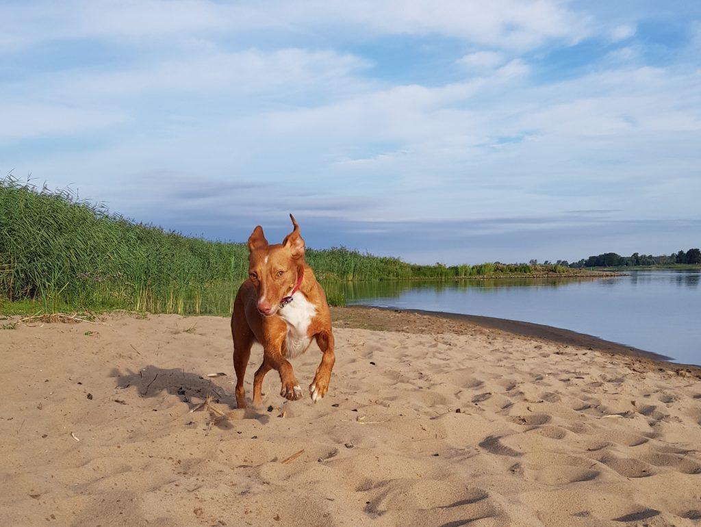 Strand an der Oder im Oderbruch by Birgit Strauch