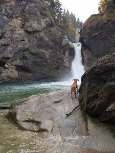 Buchenegger Wasserfälle by Birgit Strauch
