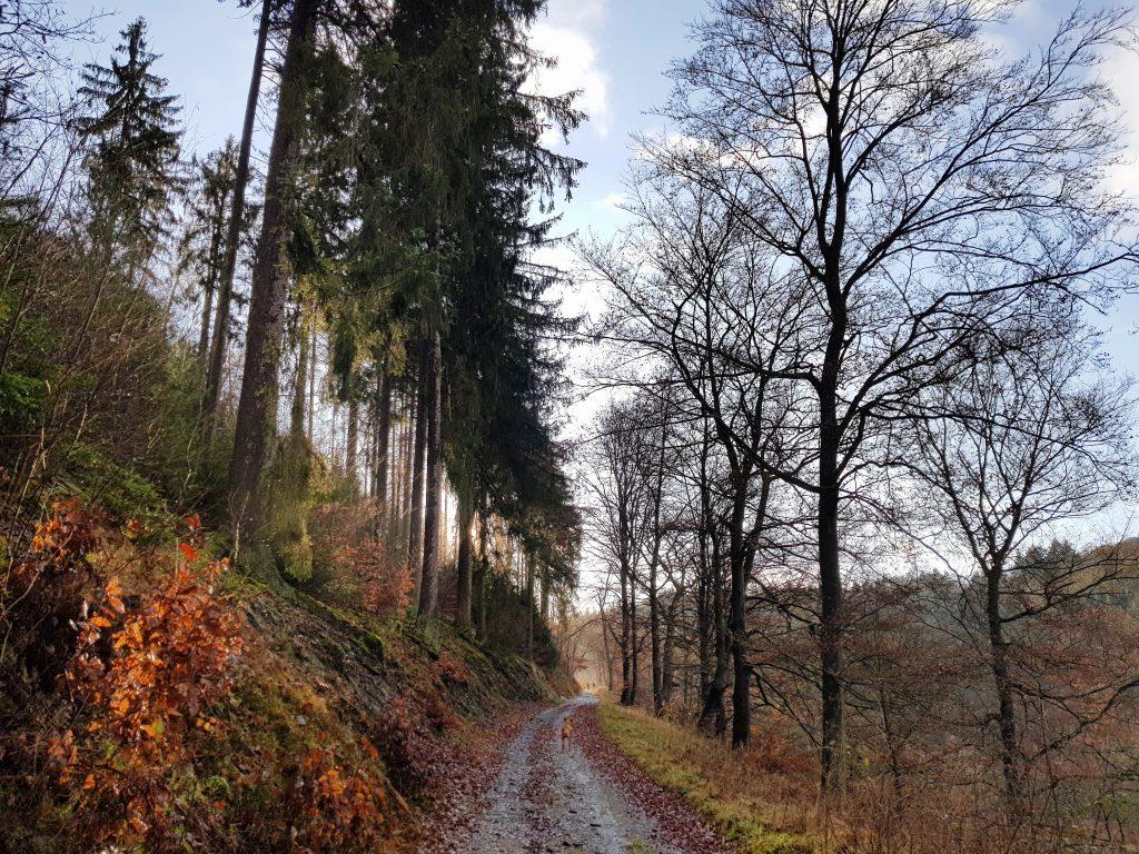 Wandern am Edersee