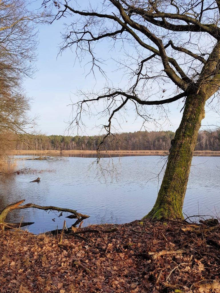 Wanderung um den Oderiner See by Birgit Strauch