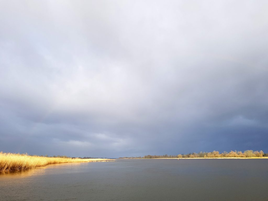 Morgen nach dem Sturmtief Sabine im Minicamper by Birgit Strauch