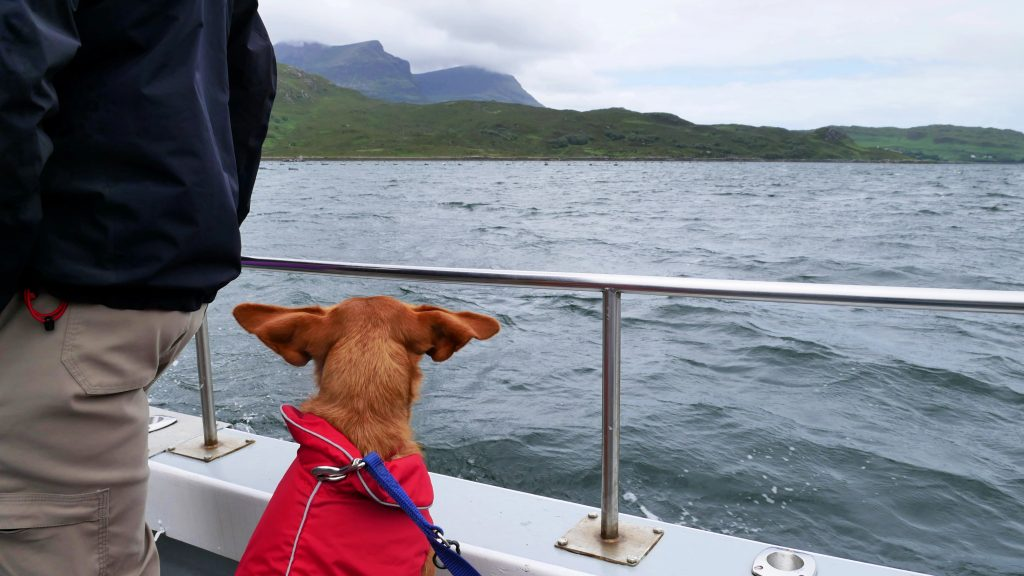Seehunde im Loch Gleann Dubh by Birgit Strauch