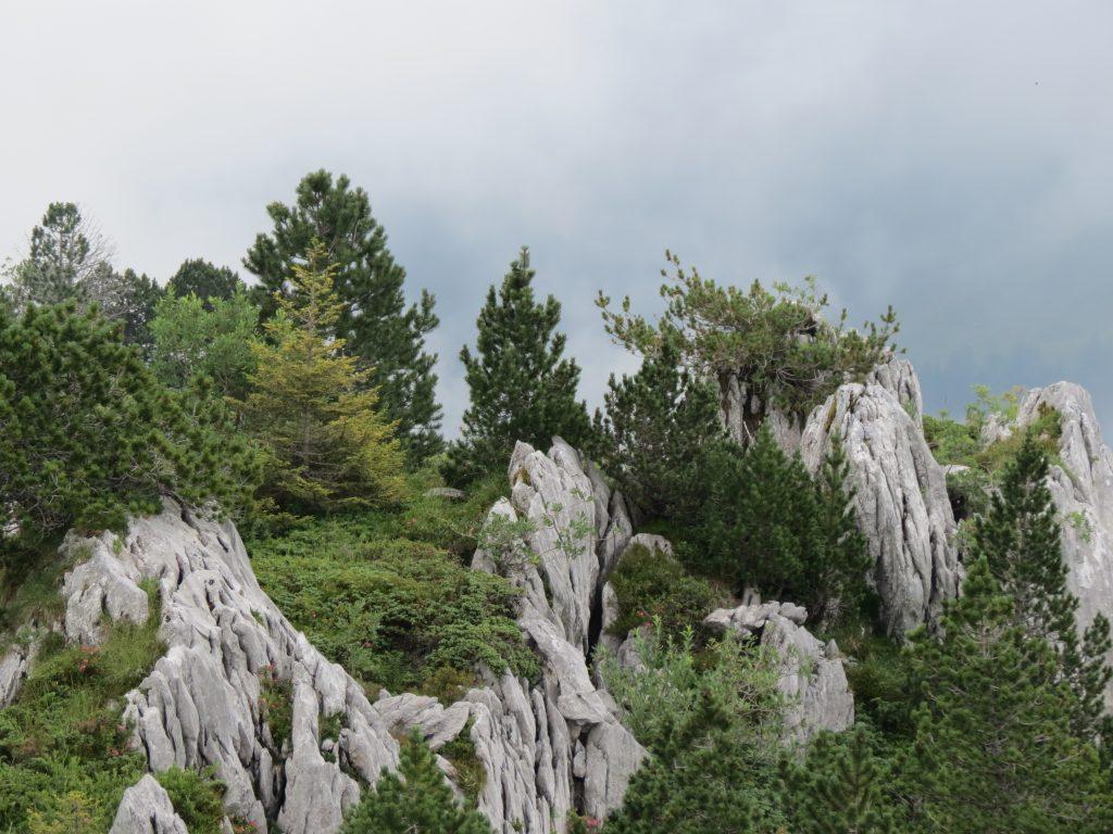 Schweiz - Liebe zur Natur